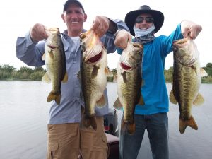 Okeechobee Bass Fishing Charters